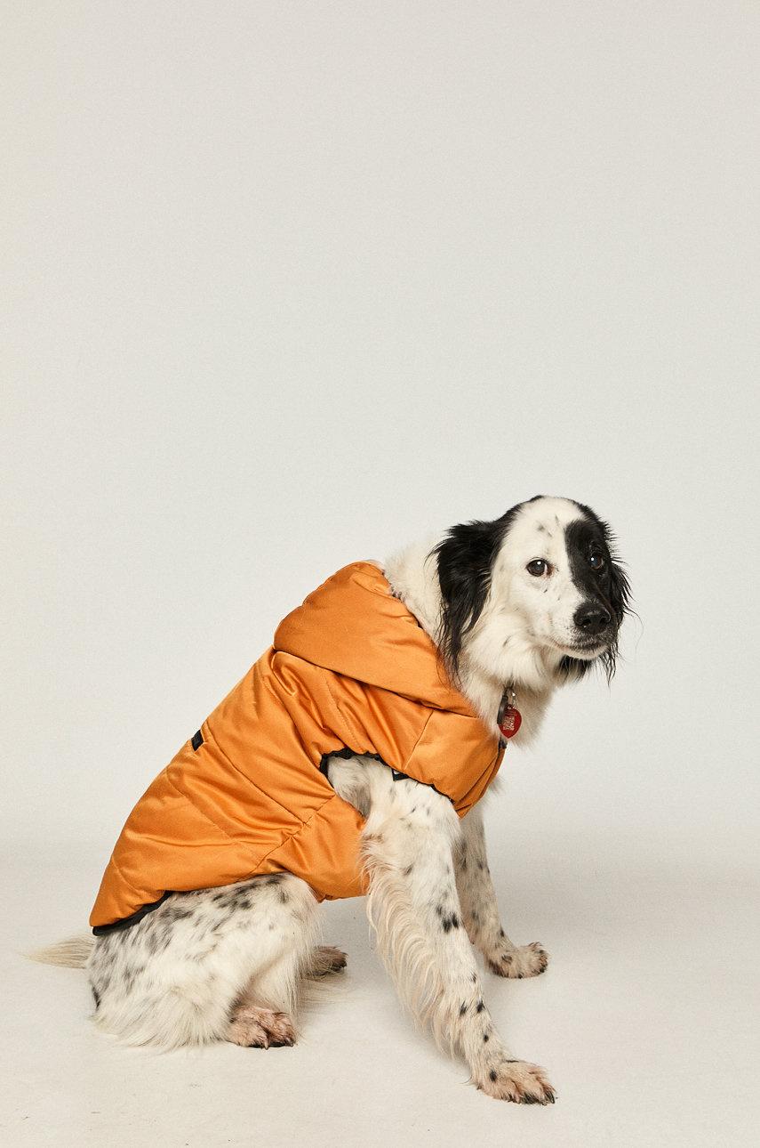куртка для питомцев Medicine