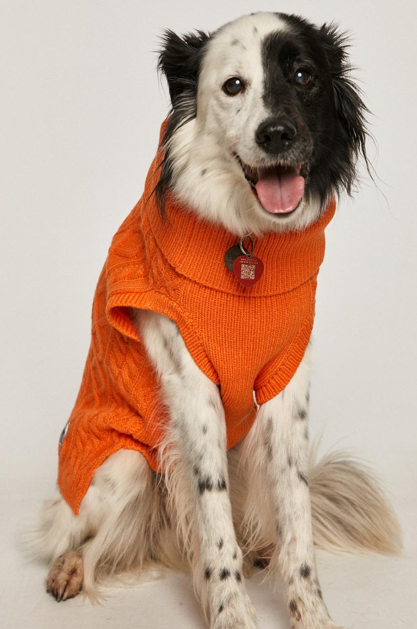 свитер для питомцев Medicine